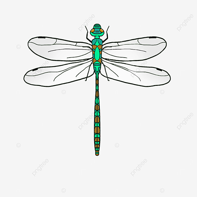 green realistic dragonfly clip art