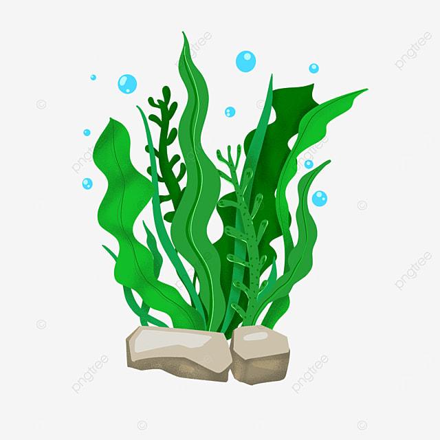 green seaweed clip art