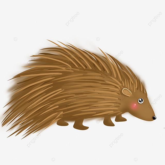 nocturnal porcupine clip art