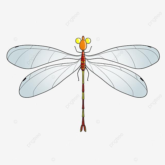 orange red dragonfly clip art