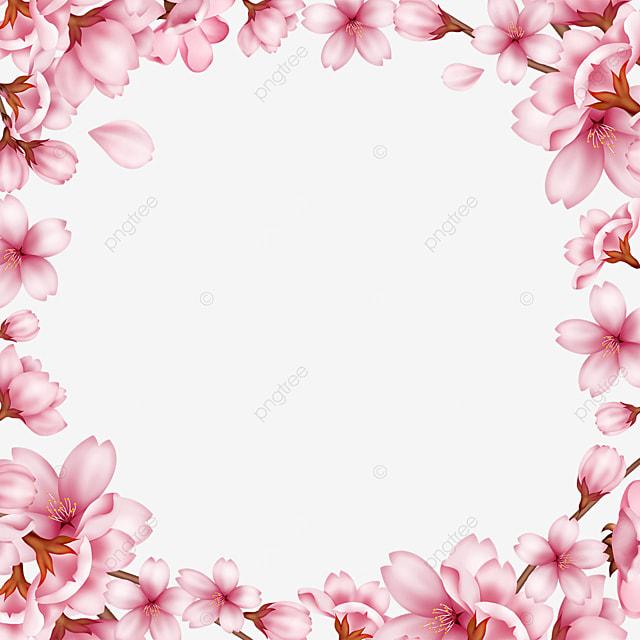 pink spring bud sakura border