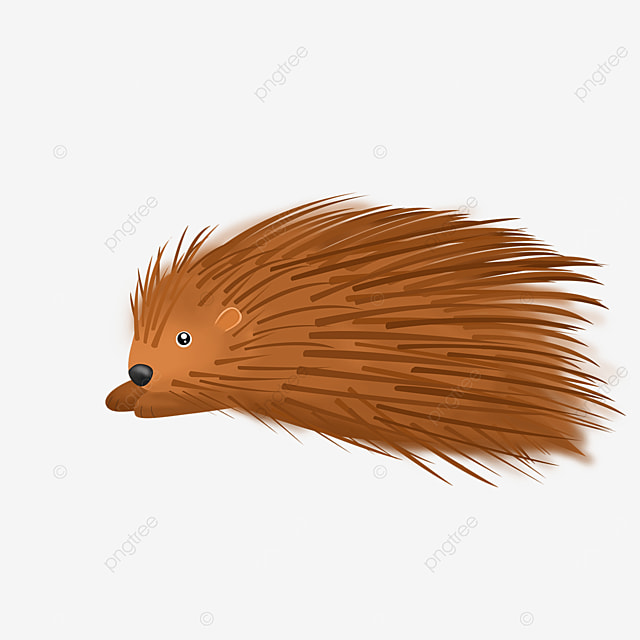 porcupine lying down clipart