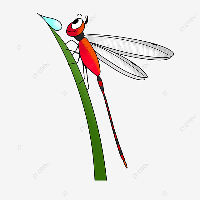 red dragonfly observing water drops clipart