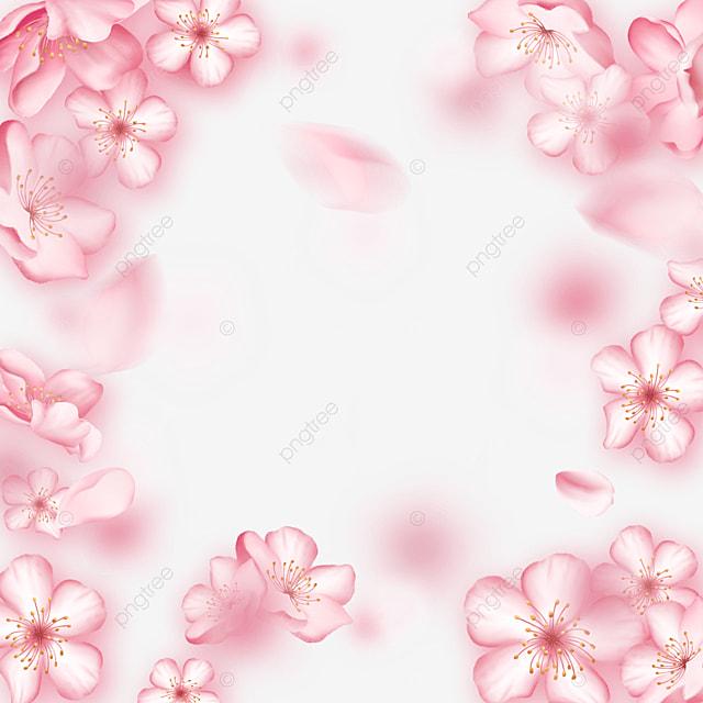 blur pink dynamic light effect cherry blossom border
