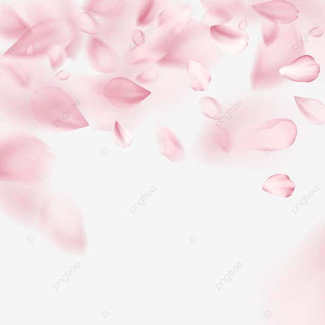 pink petals falling dynamic light effect cherry blossom border