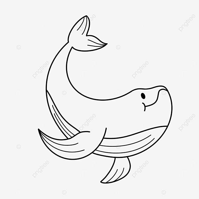 albacore whale clipart black and white