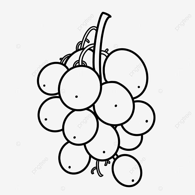 branch segmented grape clipart black and white