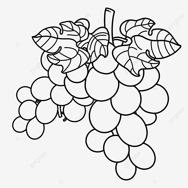 branches and leaves of grapes clipart black and white
