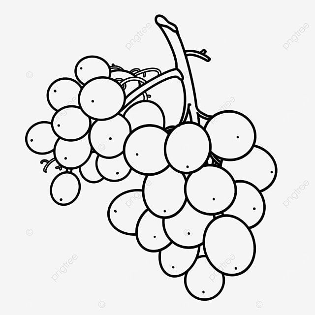 branching grapes clipart black and white