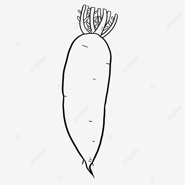 fine variety carrot black and white clipart