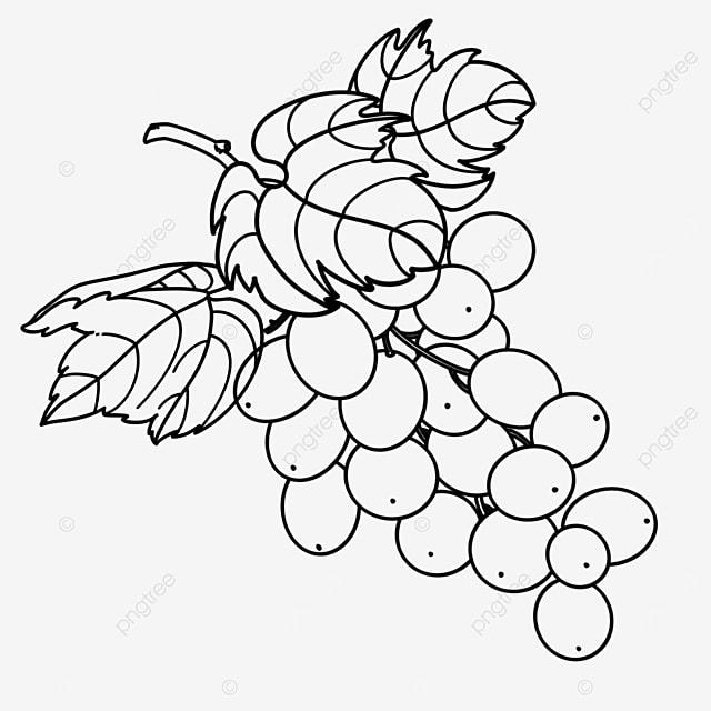 grape leaf grape clipart black and white