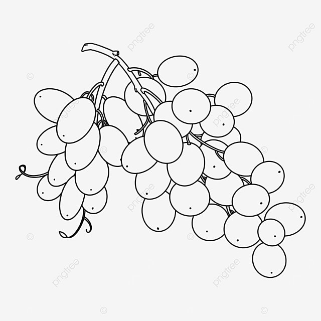 grapes hanging grapes clipart black and white