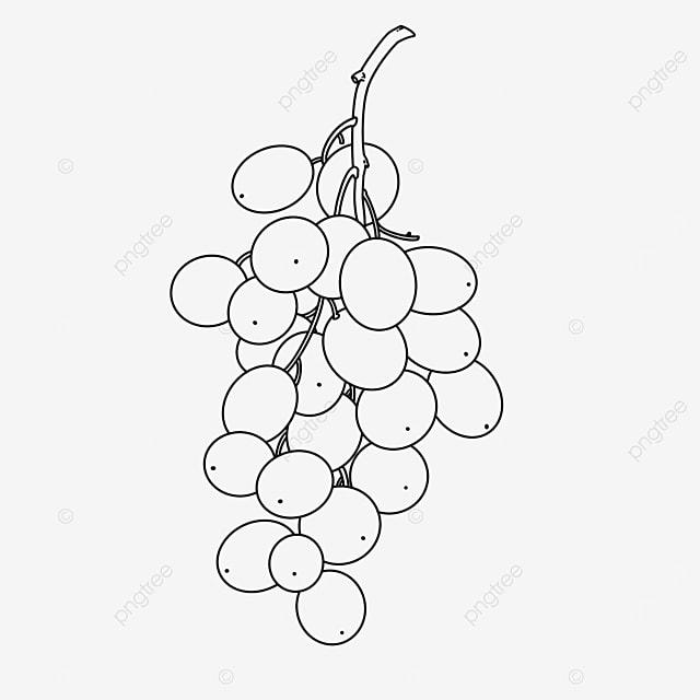 green grape clipart black and white