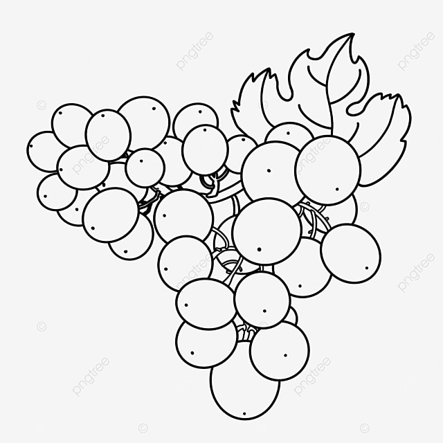 large branch of grapes clipart black and white