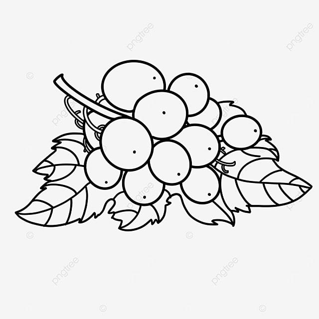 leaf grape clip art black and white