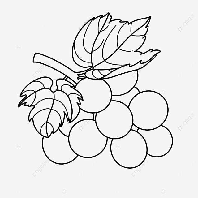leaf grape clipart black and white