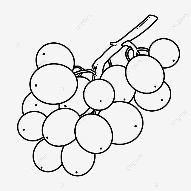 leaf vein grape clip art black and white
