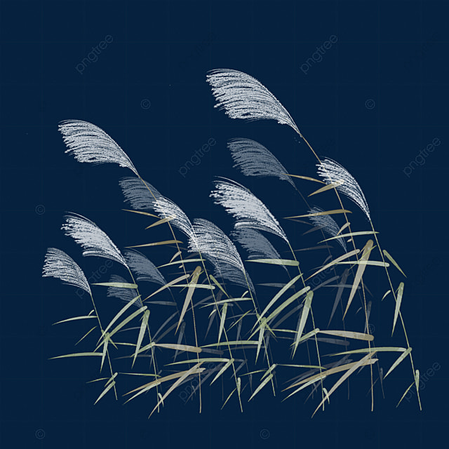 Reeds Reed Reed Flower Png Transparent Image And Clipart For Free Download