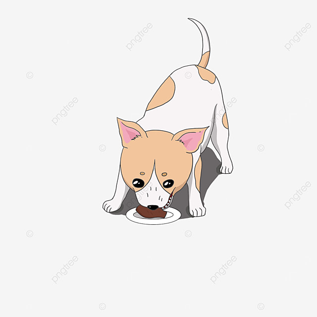 chihuahua eating meat clipart