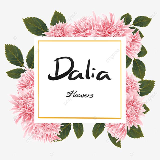 dahlia border flower cluster