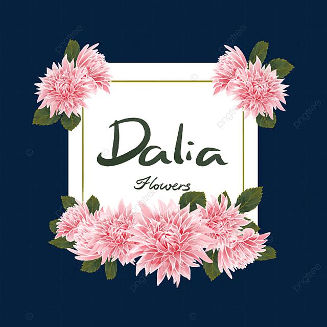 dahlia border leaves pink flowers