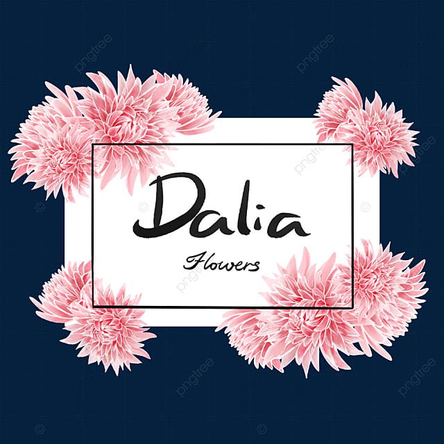 dahlia border pink