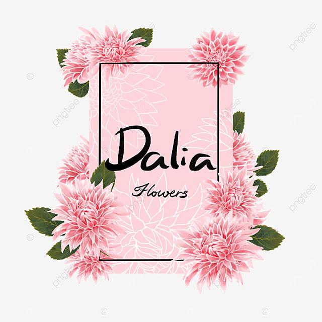 dahlia border pink vertical row