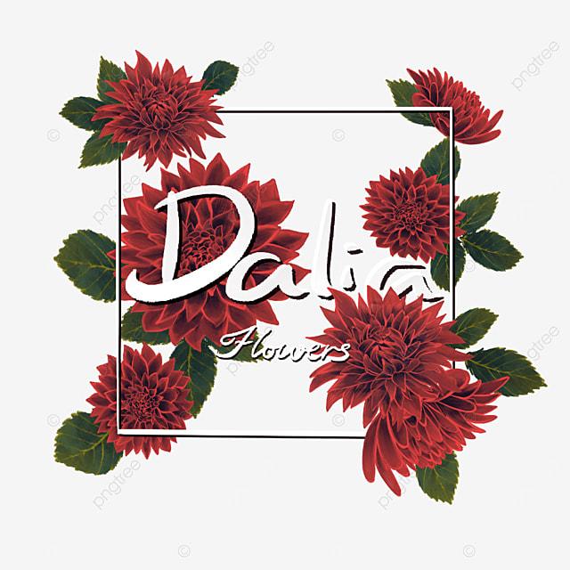 dahlia border red flower leaf