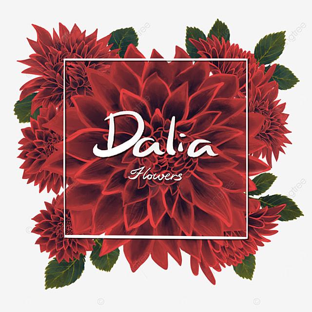 dahlia border red flowers