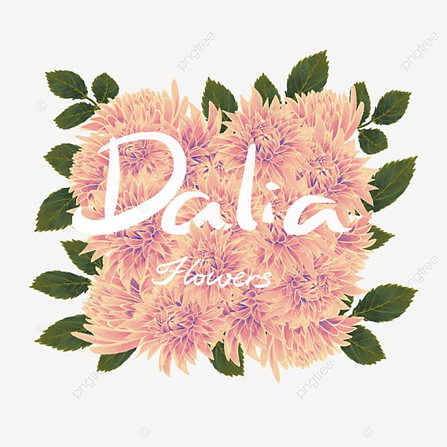 dahlia border yellow