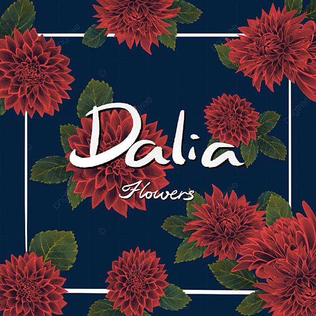 dahlia red border flower