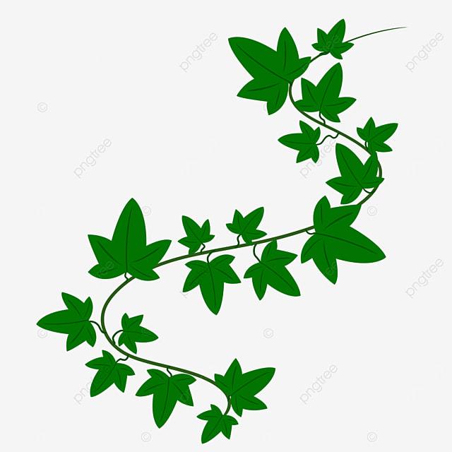 green vine ivy clipart