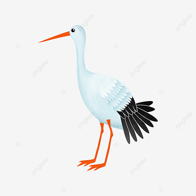 haughty and smart white stork clipart