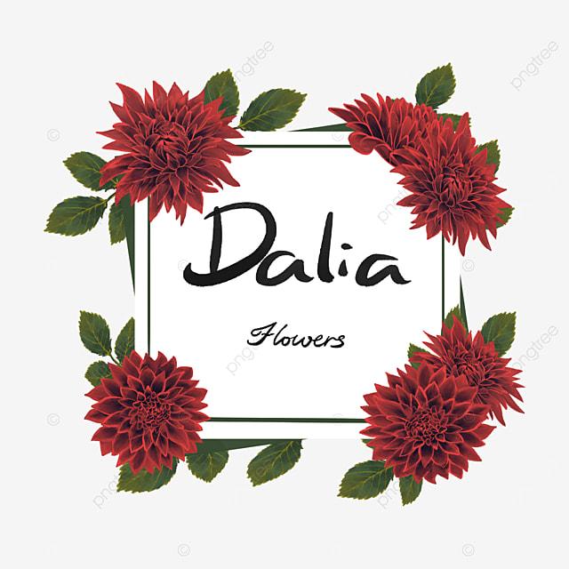 dahlia border big red flower cluster