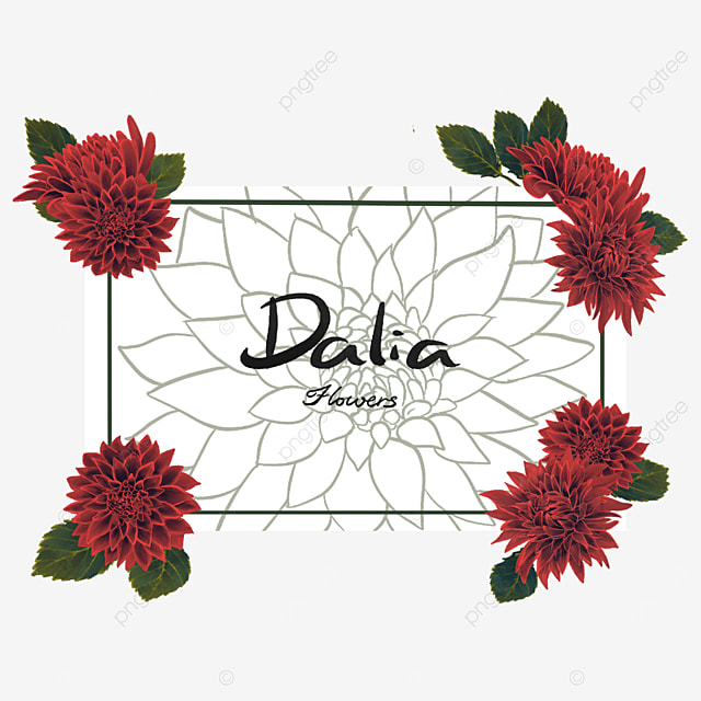 dahlia border floral border
