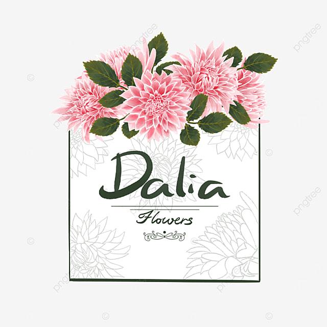 dahlia border pink flower cluster