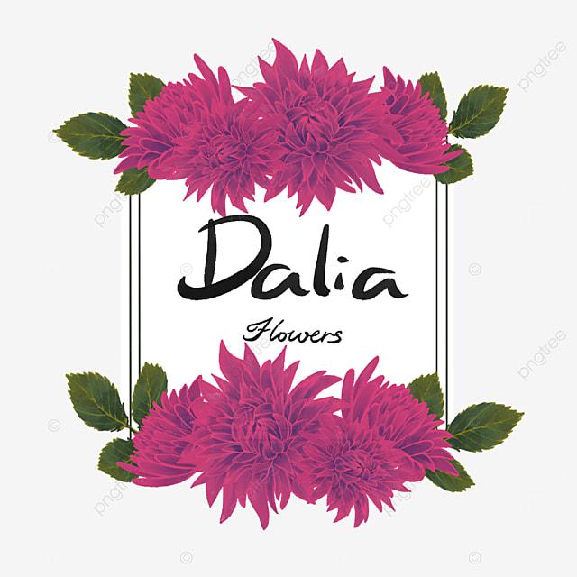 dahlia border plum red square