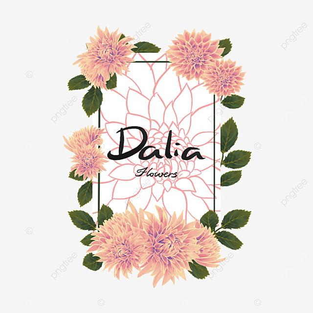 dahlia border yellow flower cluster
