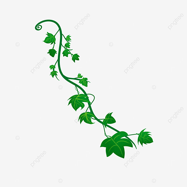 green branches of ivy clip art