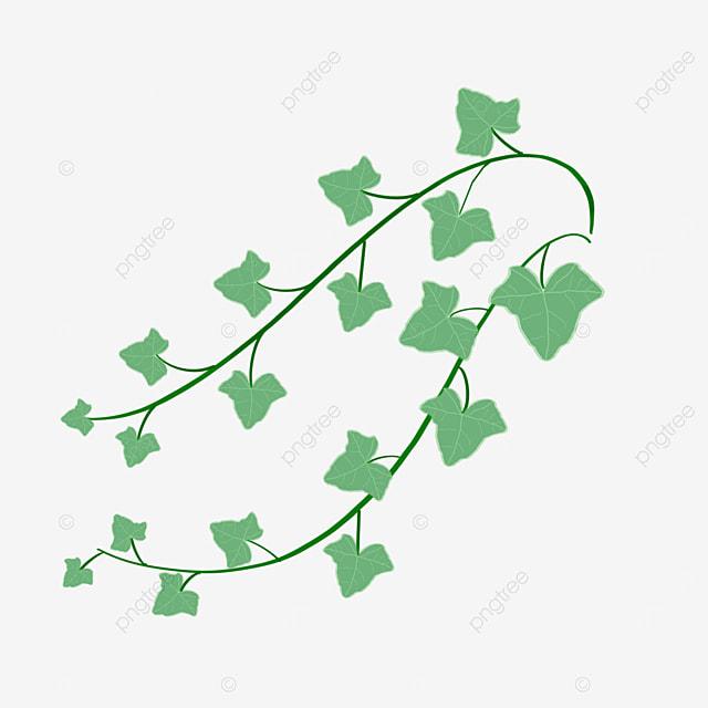 green ivy bush clipart