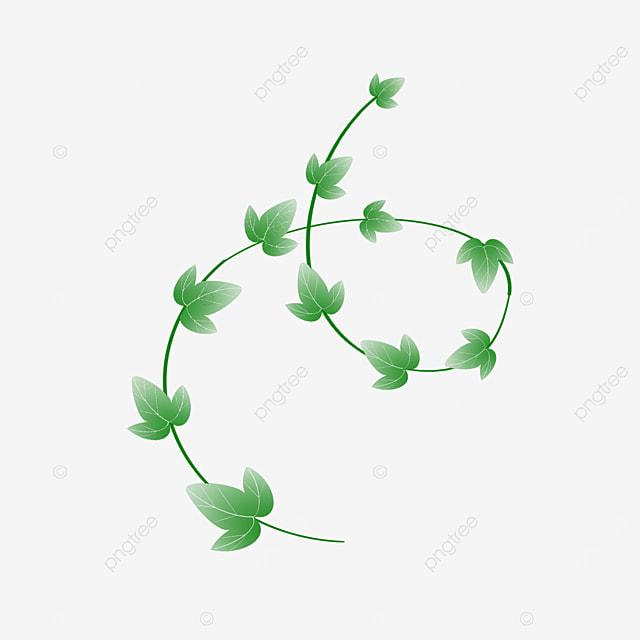 green ivy vine clipart