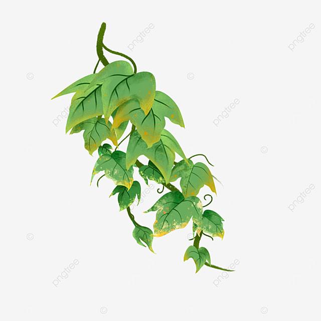 ripe ivy clip art