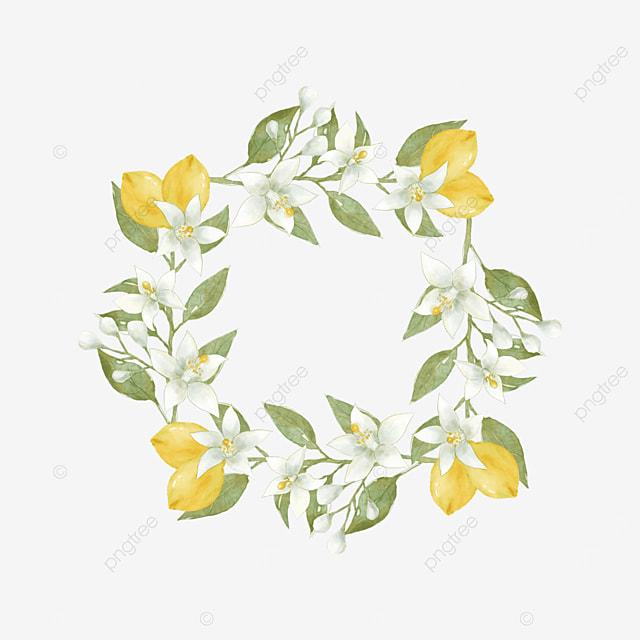 creative lemon border plant border