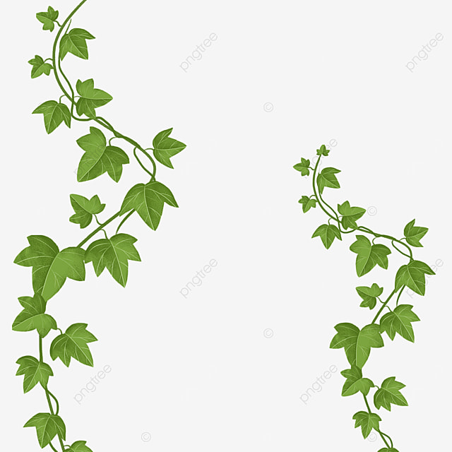 curved branches ivy clipart