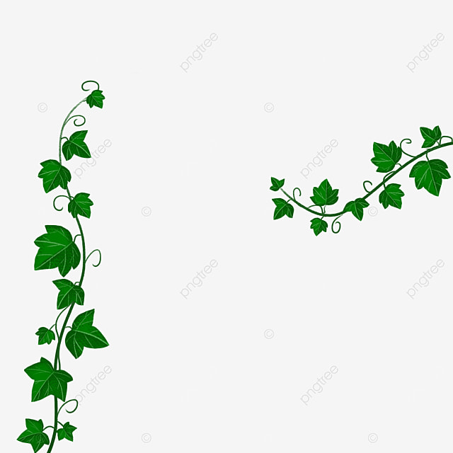 dark green ivy clipart