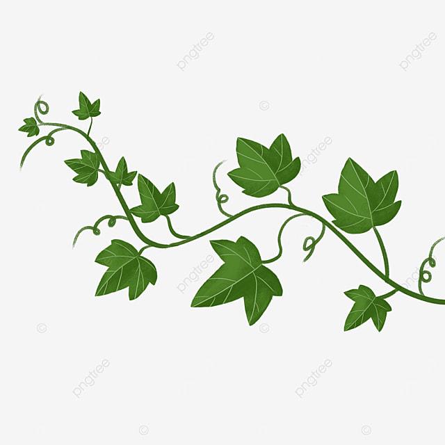 dark green leaf ivy clipart