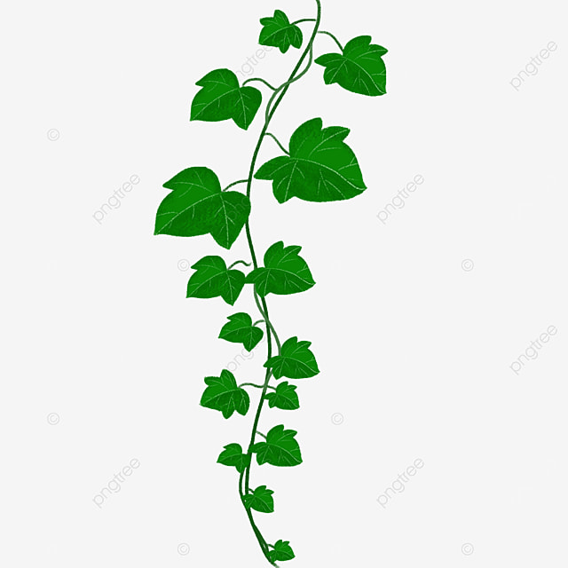green branches leaves ivy clipart