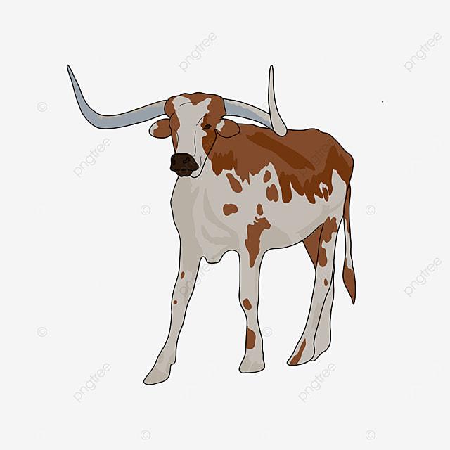 longhorn cow realistic clip art