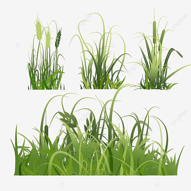 setaria bushes spring easter green meadow