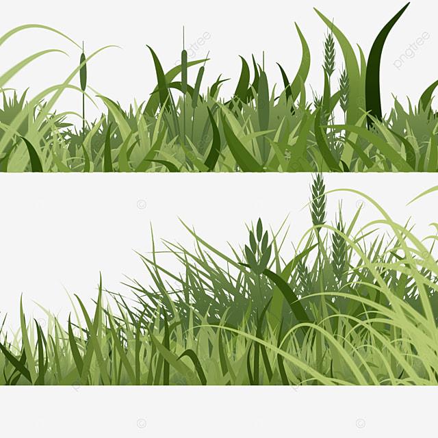 setaria viridis spring easter green meadow
